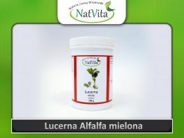 Alfalfa - Lucerna proszek - cena sklep wrzody