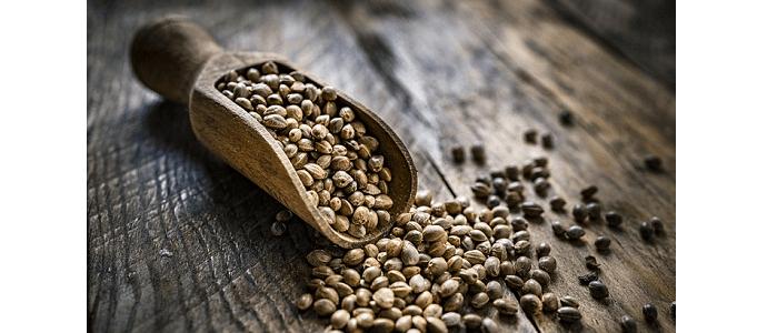 Białko dla wegan i wegetarian. Jak uzupełnić niedobory?